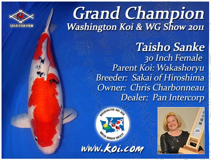 Washington koi show 2011 grand champion for Grand champion koi for sale