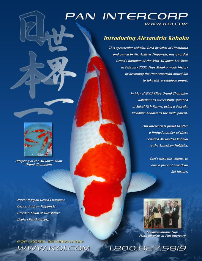 Alexandria kohaku offspring update for Grand champion koi for sale